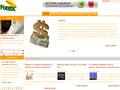Salut Forex : actualités du Forex et formation au Trading