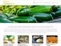 Recette Courgette : confectionner des bons plats avec les courgettes