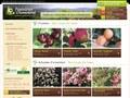 Pépinières Gromolard : commander en lot des arbustes d'ornement - 69