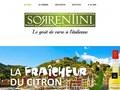 Limoncello de Sorrentini : à déguster seul et bien frais ou incorporé dans différentes recettes