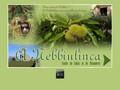 A Nebbiulinca : A la découverte d'une châtaigneraie