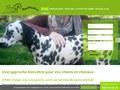 4 Patt Osteo : massage pour cheval en Belgique