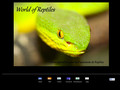 Forum reptiles : crocodiles, serpents et grenouilles