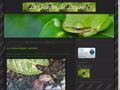 Jardin de Laurent : les fleurs et insectes des jardins