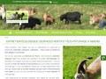 La Chèvrerie de Pierrot : entretien écologique d'espaces verts à Amiens